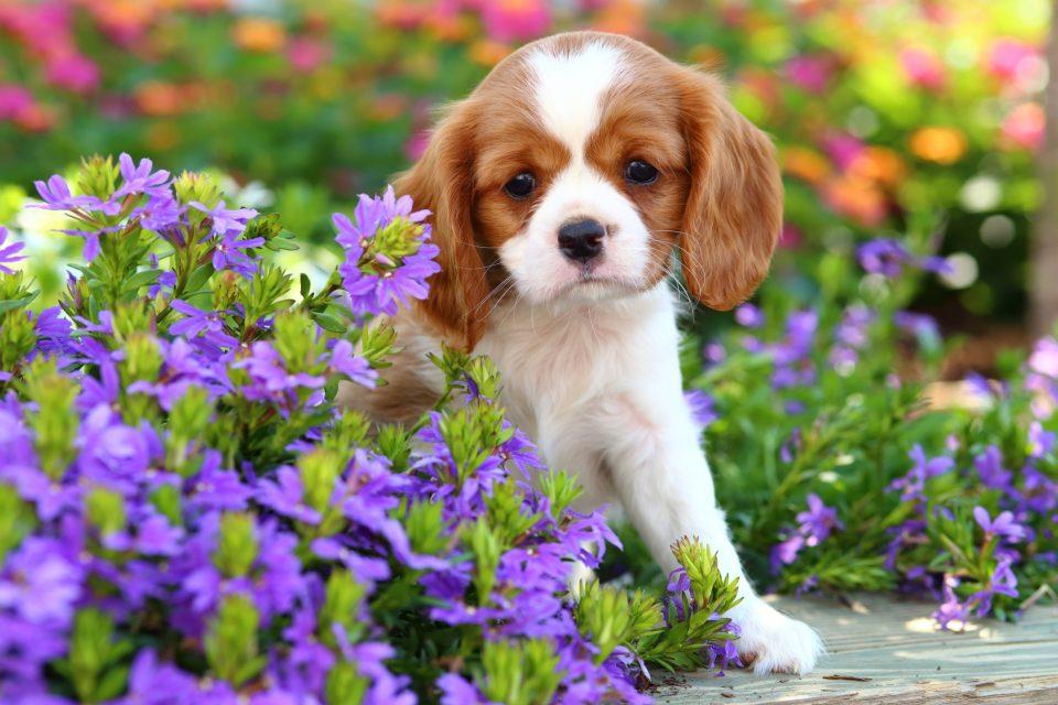 Alimentazione cane cucciolo puppy