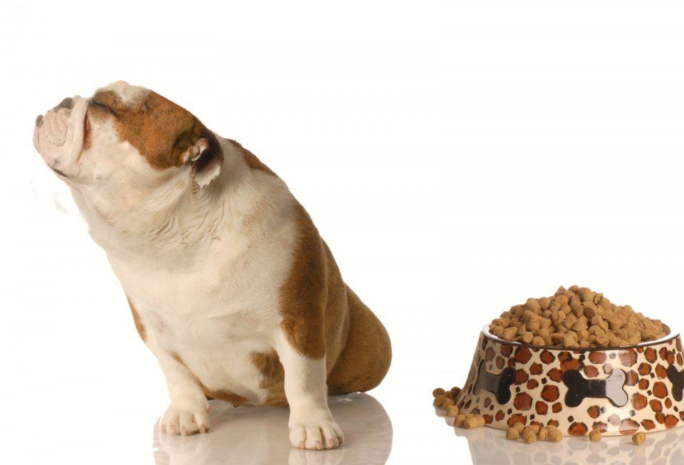 I segnali che il tuo cane non ha una buona alimentazione