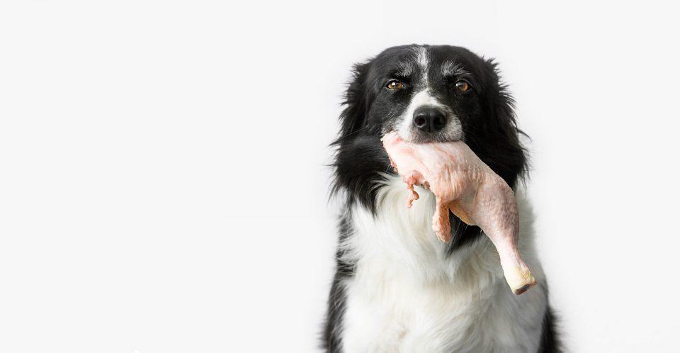Cibo per cani ingredienti di qualita