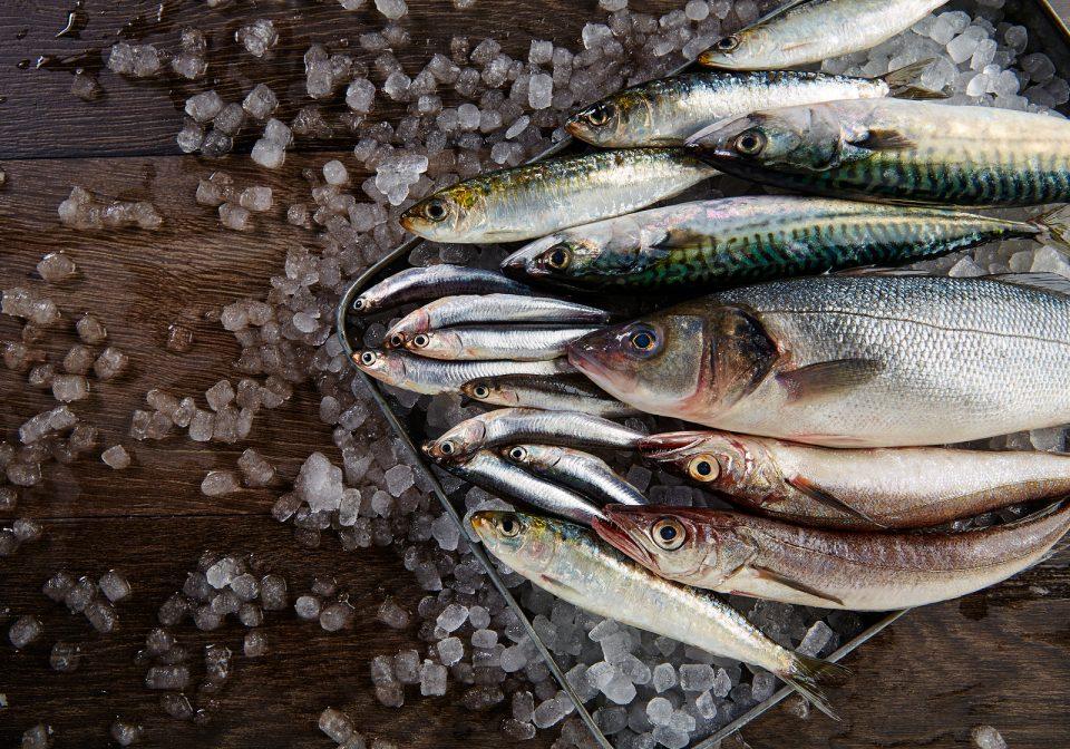FirstMate crocchette per cane con pesce azzurro pescato nell'Oceano Pacifico