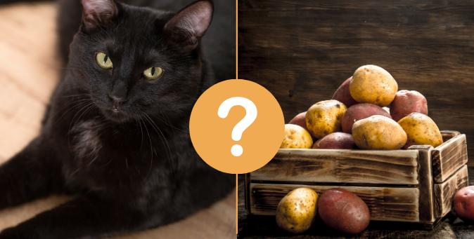 le patate fanno male al gatto