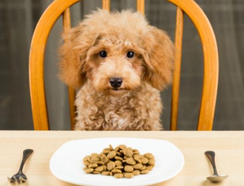 L'importanza di un cambio di cibo graduale