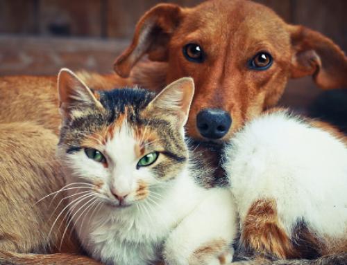 FirstMate è adatto a tutti i cani e a tutti i gatti?