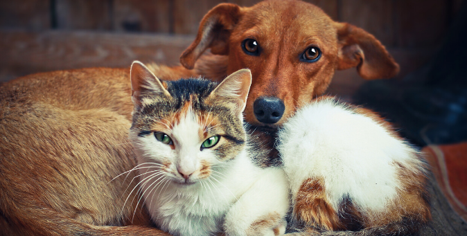 firstmate adatto a cani e gatti