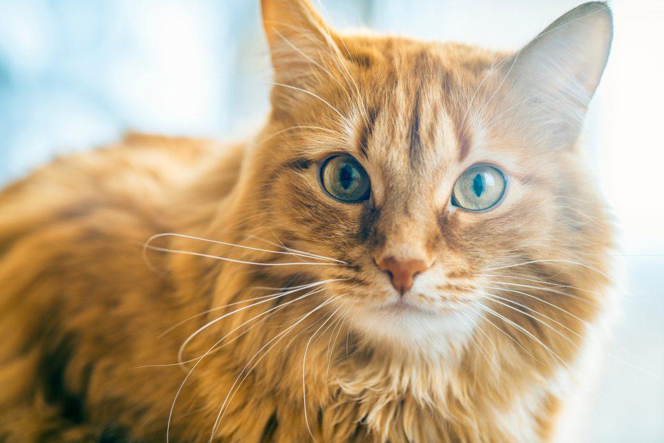 Cibo per gatti contro la caduta del pelo, per pelo lucido e folto
