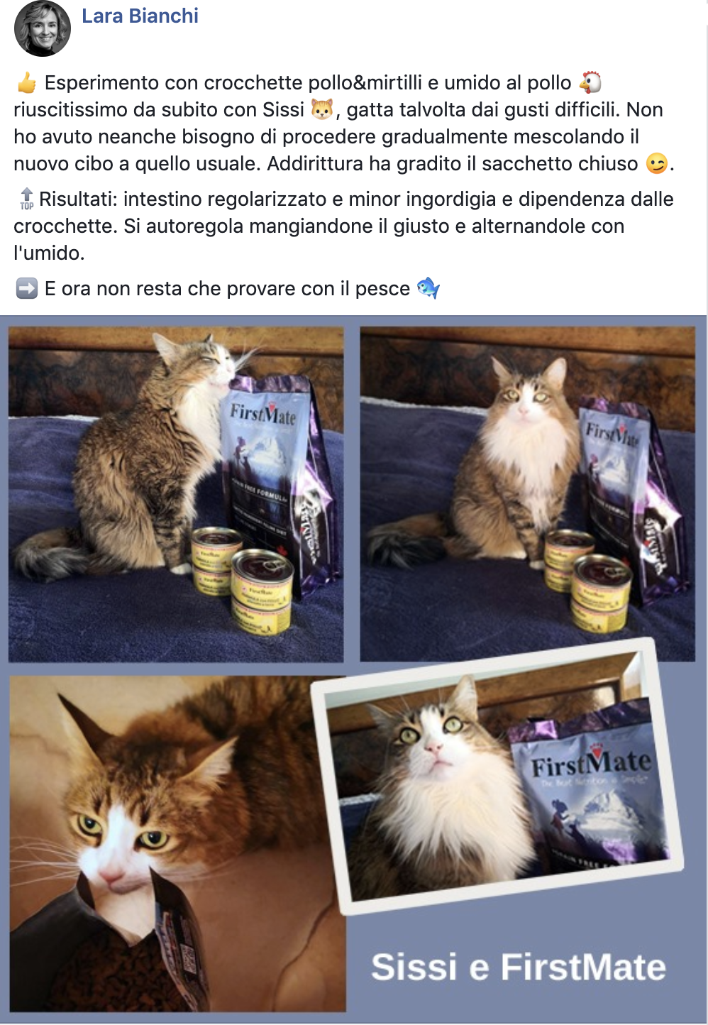 testimonianza gatto firstmate