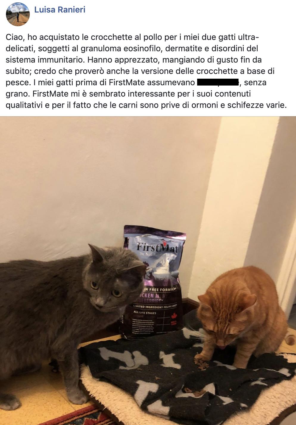 testimonianza gatto 16