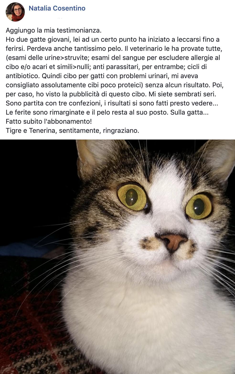 testimonianza gatto 17