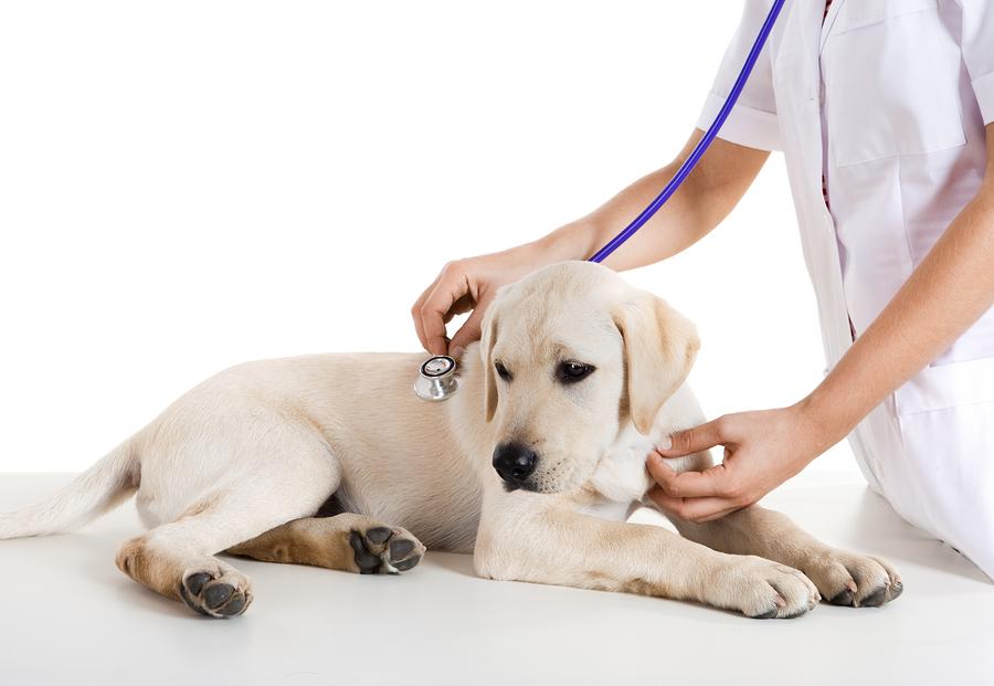 Cibo studiato per la salute del cane