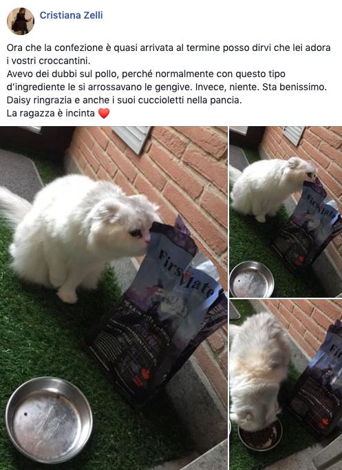 testimonianza_gatto_29
