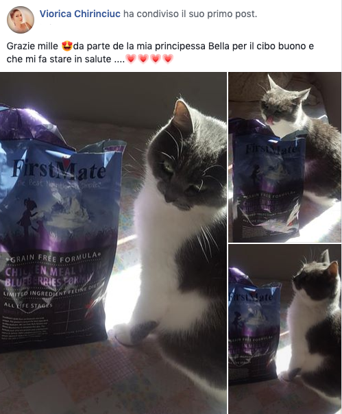 testimonianza_gatto_28