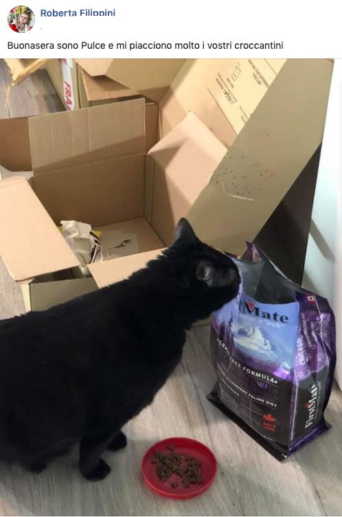 testimonianza gatto 25