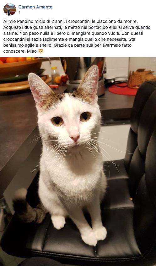testimonianza gatto 22