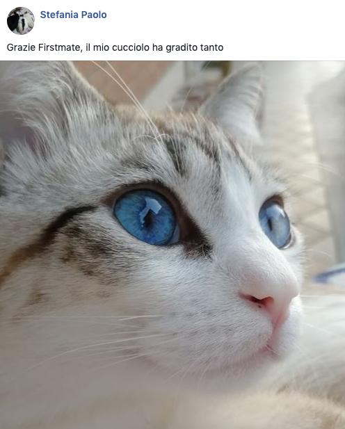 testimonianza gatto 20