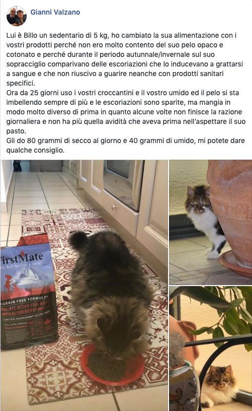 testimonianza gatto 18