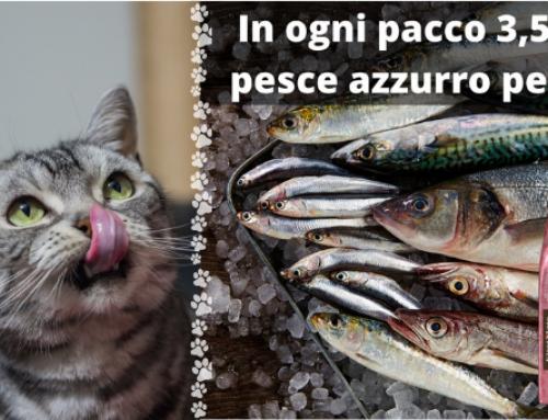 Quanto pesce azzurro c'è nelle crocchette per gatto?