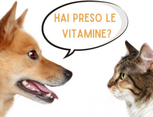 Perché le integrazioni sono fondamentali per cani e gatti