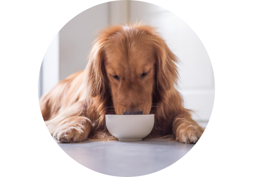 Alimenti FirstMate per cani