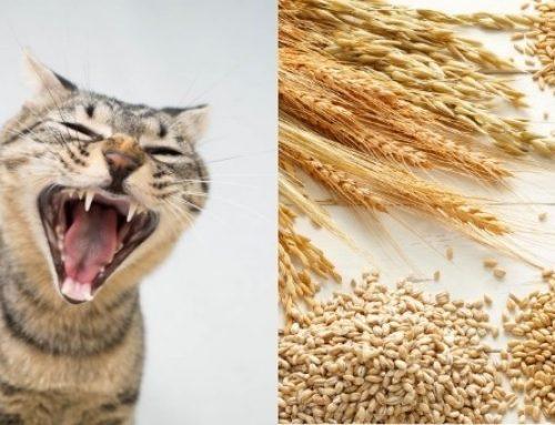 I cereali fanno bene al tuo gatto? Tutta la verità