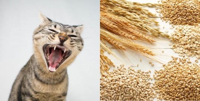 I cereali fanno bene al gatto?
