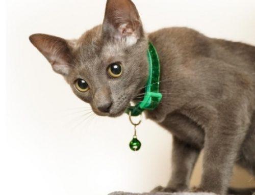 Campanello al gatto: 6 motivi per cui non dovresti mai e poi mai metterlo
