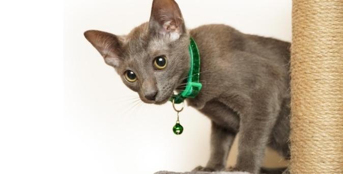 campanello al gatto: ecco perché non dovresti mai metterlo