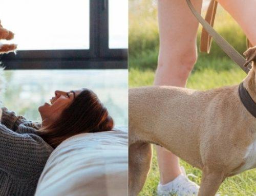 L'origine della salute di gatti e cani