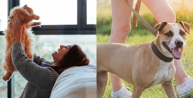 L'origine della salute di cani e gatti