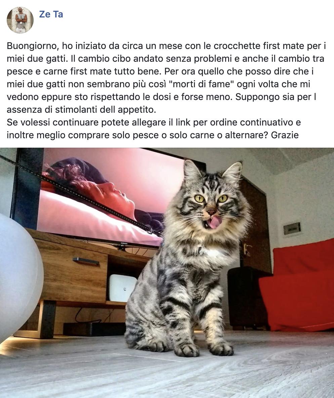 testimonianza_gatto_35