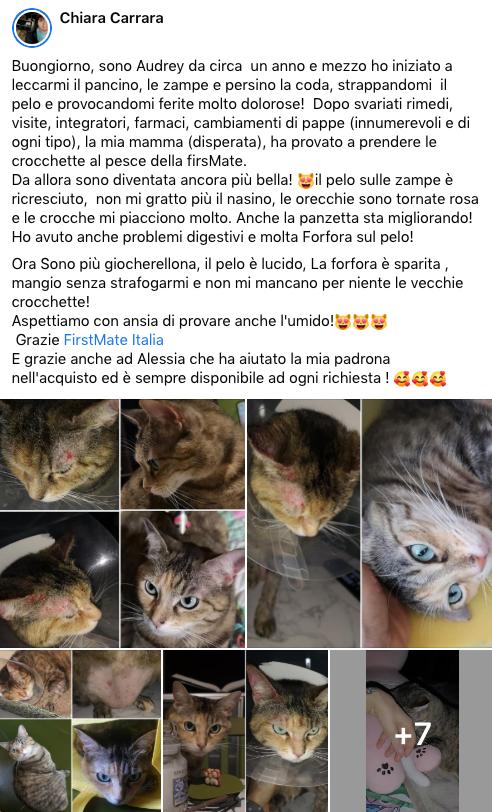 testimonianza_gatto_46