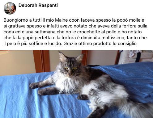testimonianza_gatto_47