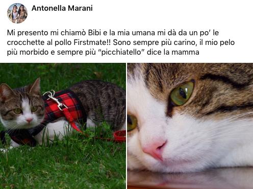 testimonianza_gatto_48