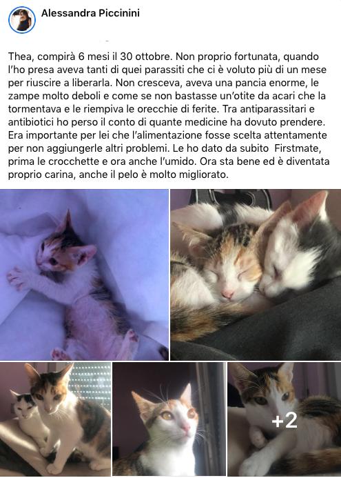 testimonianza_gatto_56