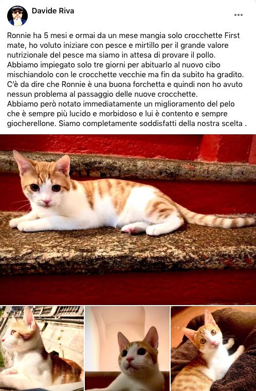 testimonianza_gatto_58